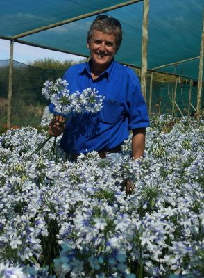 Agapanthus Twister with breeder De Wet Enviroscaping